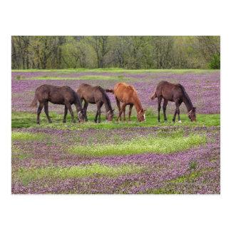 Cartão Postal Cavalos do puro-sangue no campo de flores do