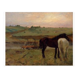 Cartão Postal Cavalos em um prado por Edgar Degas