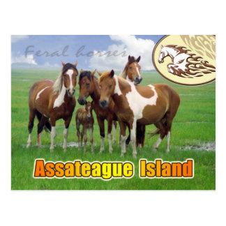 Cartão Postal Cavalos ferozes, ilha de Assateague Nat. Litoral