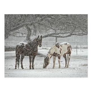 Cartão Postal Cavalos nevado