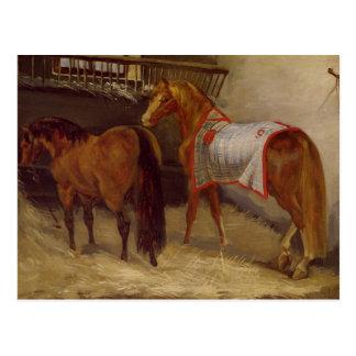 Cartão Postal Cavalos nos estábulos