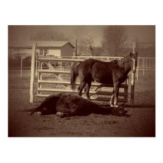 Cartão Postal Cavalos preguiçosos