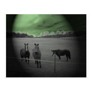 Cartão Postal Cavalos preto e branco com verde