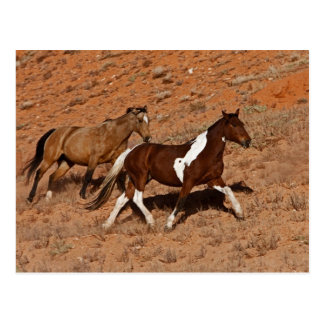 Cartão Postal Cavalos que vagueiam a TA do Big Horn de Shell