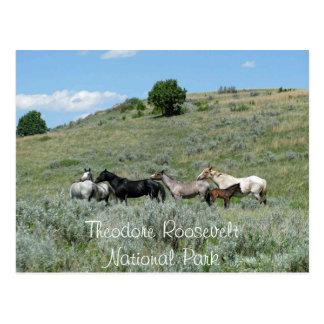 Cartão Postal Cavalos selvagens, Theodore Roosevelt NP, North