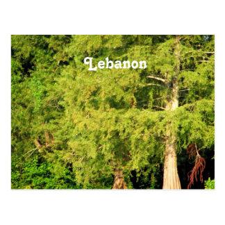 Cartão Postal Cedros de Líbano