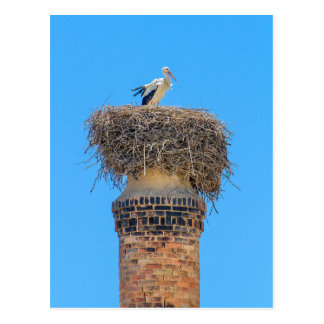 Cartão Postal Cegonha adulta no ninho em chimney.JPG