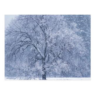 Cartão Postal Cena congelada da árvore inverno nevado