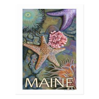 Cartão Postal Cena de MaineTidepool
