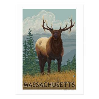 Cartão Postal Cena de MassachusettsElk