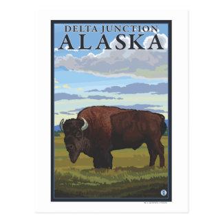 Cartão Postal Cena do bisonte - junção do delta, Alaska