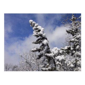 Cartão Postal cena do inverno