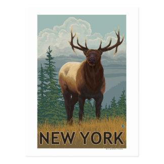 Cartão Postal Cena nova de YorkElk