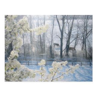 Cartão Postal Cenário pastoral da natureza no inverno