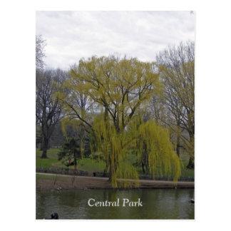 Cartão Postal Central Park 003
