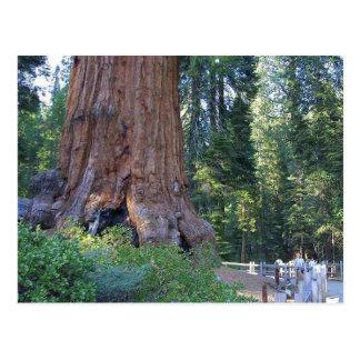 Cartão Postal Cercas do latido de Forrests das sequóias