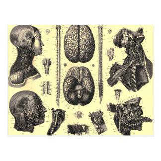 Cartão Postal Cérebro anatômico e mais