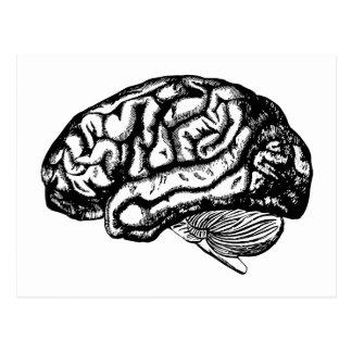 Cartão Postal cérebro humano