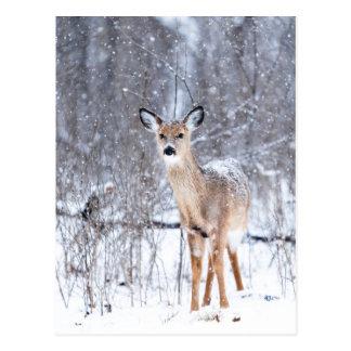 Cartão Postal Cervo