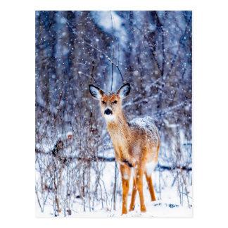 Cartão Postal Cervos bonitos super