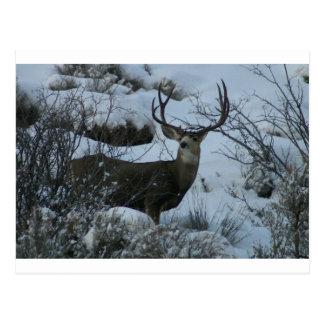 Cartão Postal cervos de mula 4X4