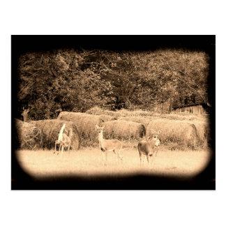 Cartão Postal Cervos do fantasma