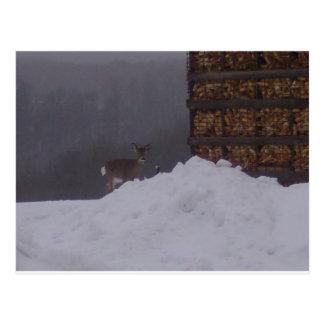Cartão Postal Cervos do inverno