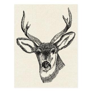 Cartão Postal Cervos do vintage