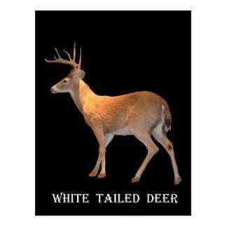 Cartão Postal Cervos (fanfarrão) Branco-Atados