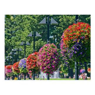 Cartão Postal Cestas de suspensão da flor