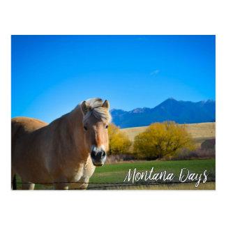 Cartão Postal Céu azul do cavalo e montanhas de Montana
