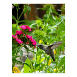 Cartão Postal Céu do colibri