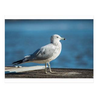 Cartão Postal Chame-me M.Seagull