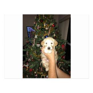 Cartão Postal Charlie o filhote de cachorro de GoldenDoodle no