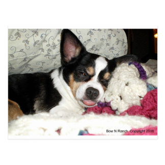Cartão Postal Chihuahua blá