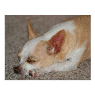Cartão Postal Chihuahua do sono