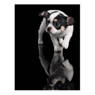 Cartão Postal Chihuahua no preto