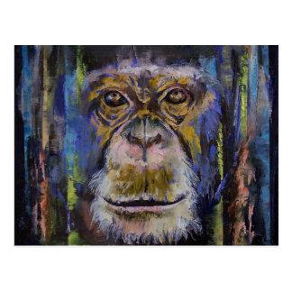 Cartão Postal Chimpanzé