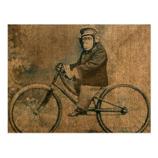 Cartão Postal Chimpanzé do vintage que monta uma bicicleta