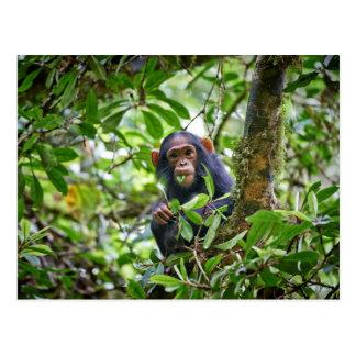 Cartão Postal chimpanzé juvenil de alimentação bonito