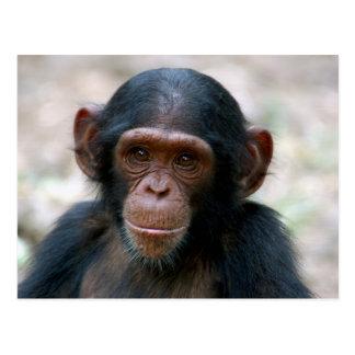 Cartão Postal Chimpanzé pequeno