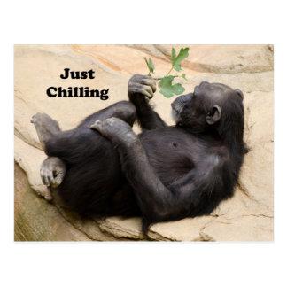 Cartão Postal Chimpanzé que relaxa