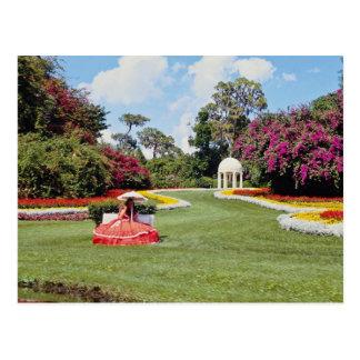 Cartão Postal Chipre vermelho jardina, flores de Florida, EUA