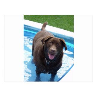 Cartão Postal Chocolate Labrador que tem o divertimento em uma