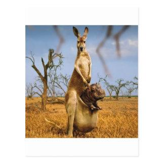 Cartão Postal Choque abstrato do bebê do canguru dos animais