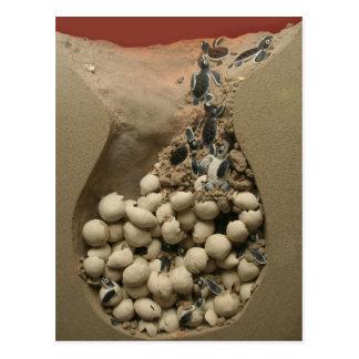 Cartão Postal Choque dos ovos da tartaruga do bebê