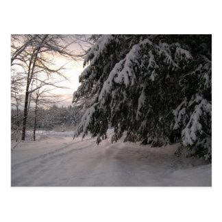 Cartão Postal Cicutas cobertos de neve