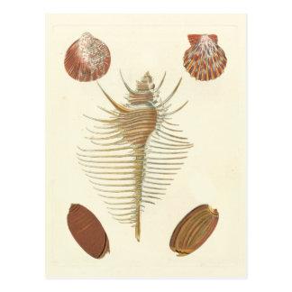 Cartão Postal Cinco do Seashells amáveis