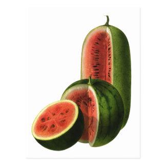 Cartão Postal Círculo alto das melancias do vintage, fruta do