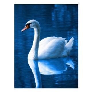 Cartão Postal Cisne branca bonita na água